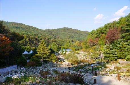 Wild Chrysanthemum Festival at Pyeong-gang Botanical Garden
